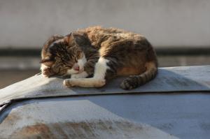 昼寝してる猫