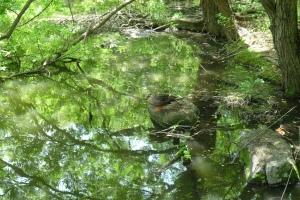 池の水面と鳥
